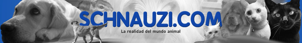 Schnauzi.com
